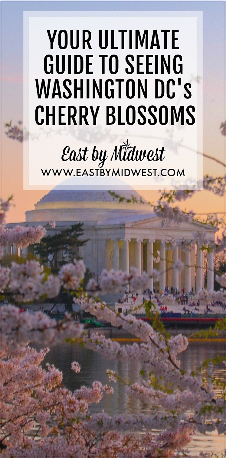 As a Washington, DC resident, I look forward to the cherry blossom\'s peak bloom every year. Read my insider tips for an amazing cherry blossom experience. #cherryblossoms #washingtondc #spring