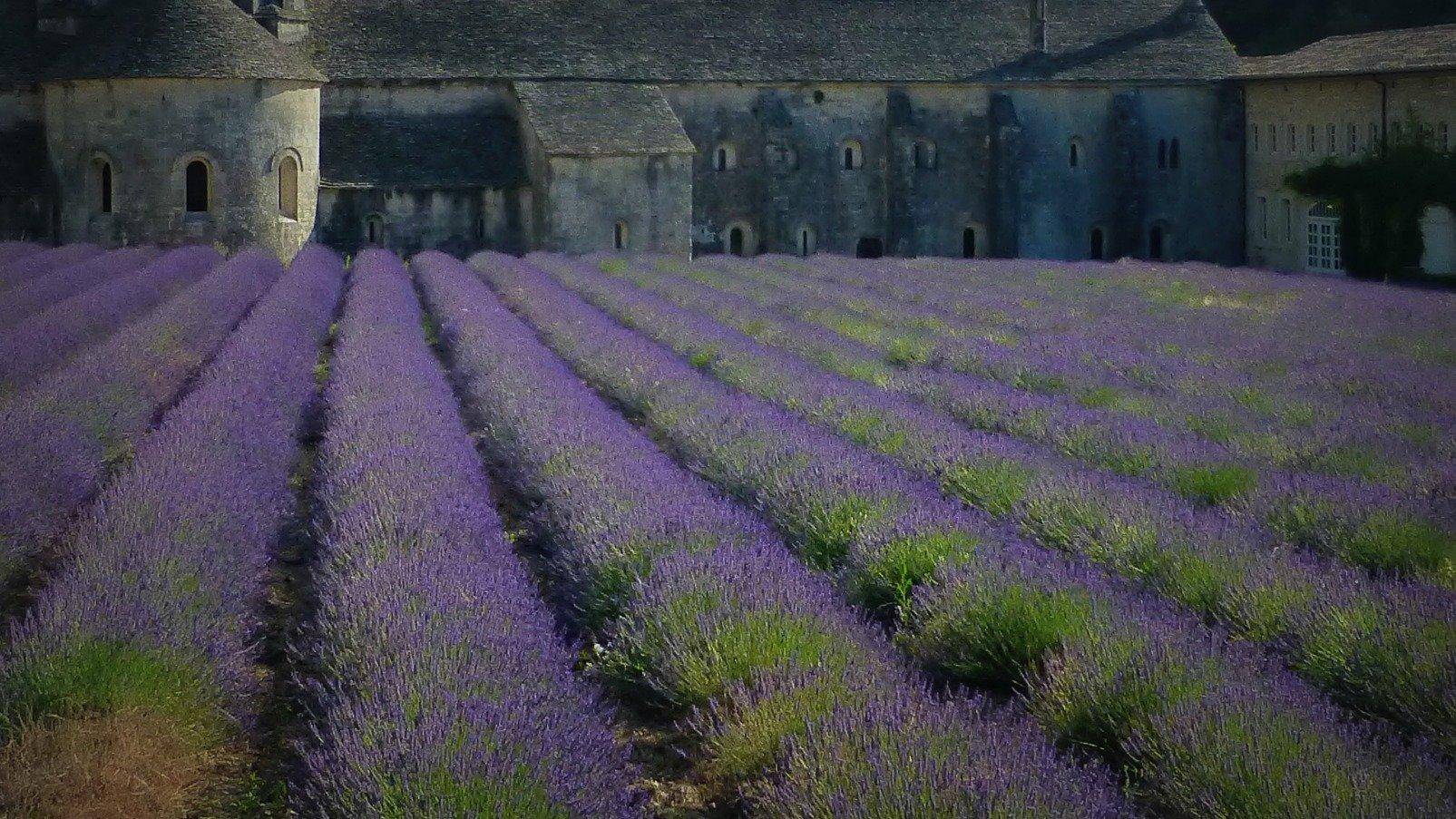 France Sénanque Abbey