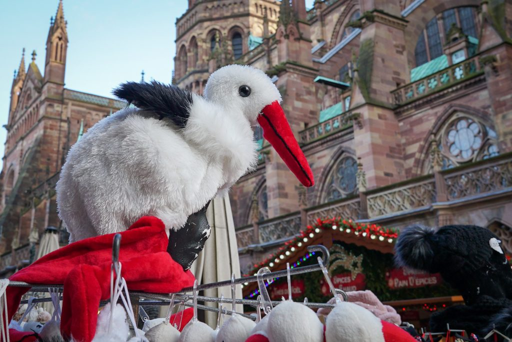 Stork by Strasbourg Cathedral - France Christmas markets need to know