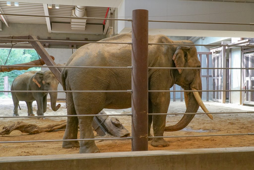 Elephant Community Center at the Smithsonian National Zoo
