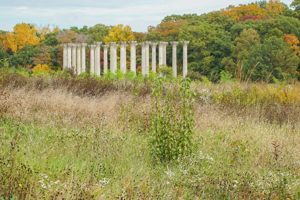 National Arboretum offers amazing fall foliage in Washington DC