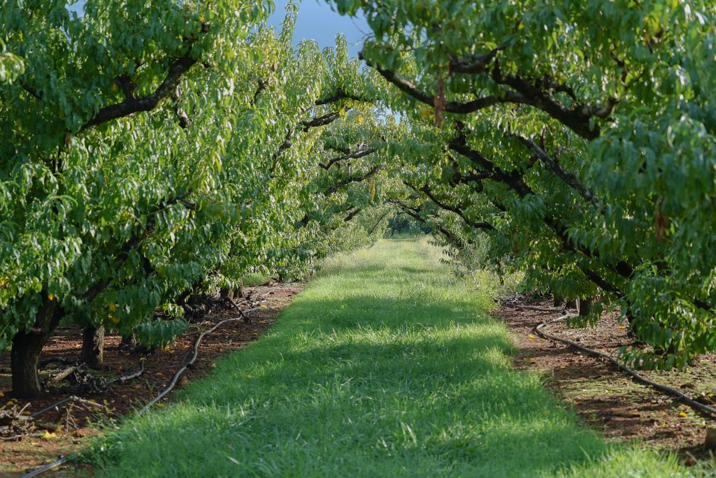 Visit an apple orchard in early fall
