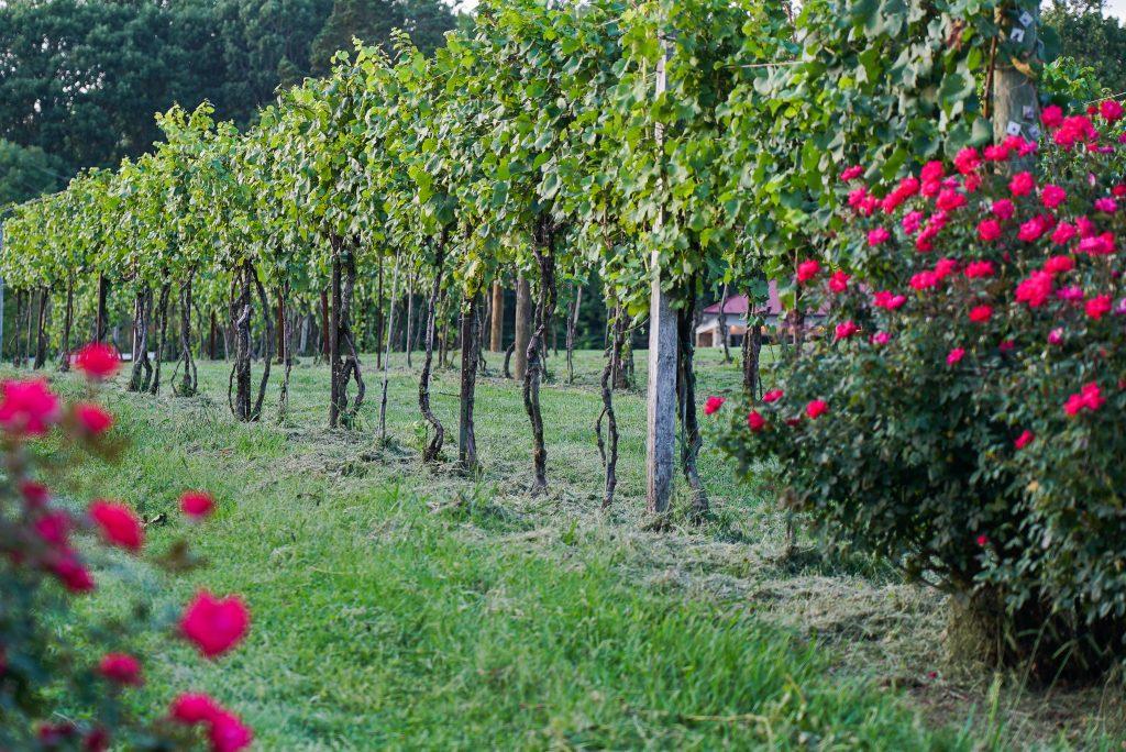 Visit a vineyard in Virginia in the fall
