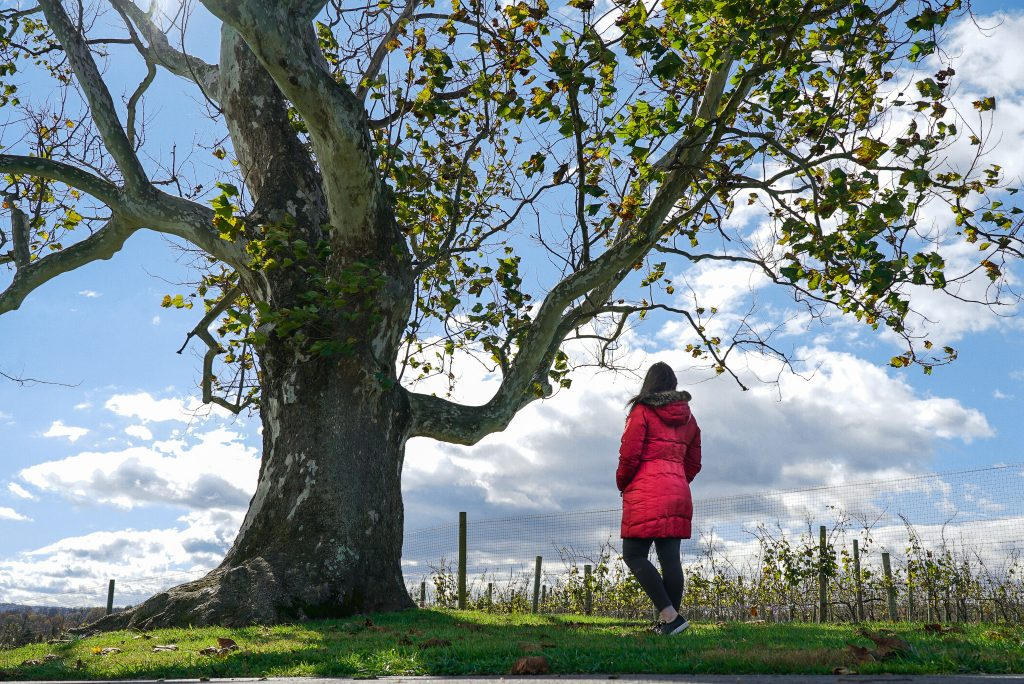 Woman in red coat standing next to tree with blue sky